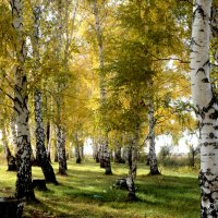 Славная осень :: Дмитрий Тарарин