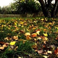 Падают желтые листья :: Дмитрий Тарарин