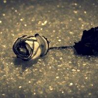 роза на снегу :: Rosto666 Исламов