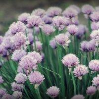 цветы :: Эльвина Гарифзянова