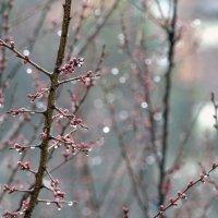 Начало весны. Дождь. :: Юрий Спасовский