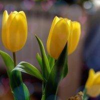Тюльпаны к 8 марта :: Александр Гапоненко