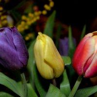 начинается весна :: Таня Фиалка