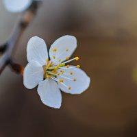 Весна просыпается :: Денис Красненко
