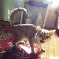 Кошка Муся. :: Светлана Кирина