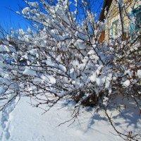 У нас зацвела сакура.  (шутка) Вчера была весна. :: Татьяна ❧
