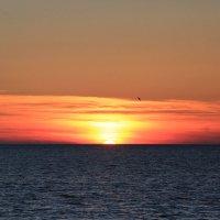 Чайка провожает заходящее солнце :: valeriy khlopunov