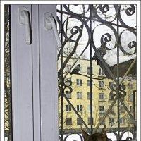 "Отстань. Там птички за окном, а ты все ""кис"" да ""кис"" :: Рамиль Хамзин"