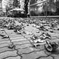 Осень :: Алексей Окунеев