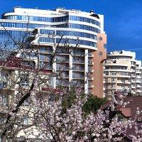 Городской пейзаж на фоне цветущего абрикоса :: Валерий Дворников