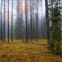 Поздняя осень :: Сергей Шабуневич