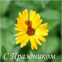 С Праздником! :: Юлия Иванова (Константинова)