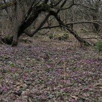 В дремучем лесу... :: Нина Сигаева