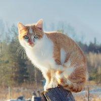Кошка по имени Белка :: Людмила Лебедева