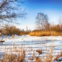 Зимний пруд. :: Александр Селезнев