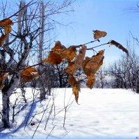 Солнышко весеннее :: Андрей Заломленков