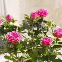 букетик из роз :: Денис Антонов