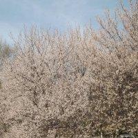 Весна :: Эльвира Белялова