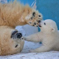 Гарда и малыш :: Владимир Габов