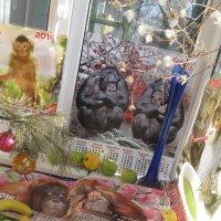 В Год Обезьяны кошкам снятся обезьяны :: Алекс Аро Аро