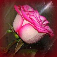 Роза в подарок . :: Мила Бовкун