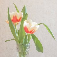 Тюльпаны :: Сергей W.Протопопов