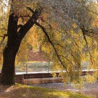 Осень :: Алёнка Шапран