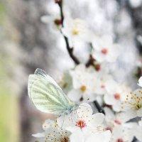 бабочка... :: Ольга Маркарова