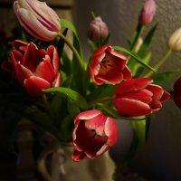 Как он красив - тот пламенный цветок! :: Galina Dzubina