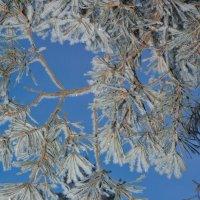 Ветка снега :: Александр