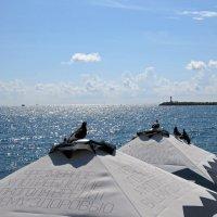 Голуби любуются морем :: Вера Щукина