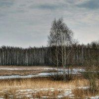 Скупые краски марта :: Милешкин Владимир Алексеевич