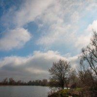дерево :: Олеся Енина