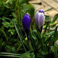 во саду ли в огороде :: Александр Корчемный