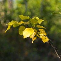 Осень :: ivan ivanovich