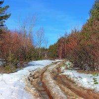 Пахнет снег оттаявшею глиной... :: Лесо-Вед (Баранов)