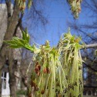 Это тоже цветы. :: Вячеслав Медведев
