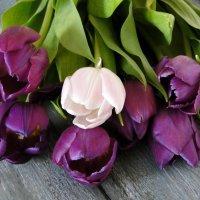 Тюльпаны :: Елена Шемякина