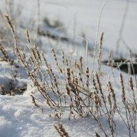 Пока ещё зима... :: Олеся Фокина