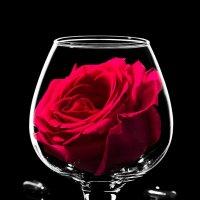 Роза в бокале на черном :: Наталья Глызина