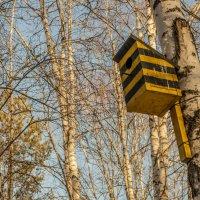 Здесь живут неправильные пчелы :: Андрей