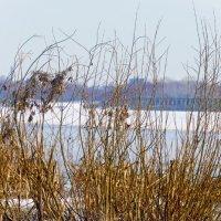 Весна на реке :: sorovey Sol