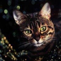 Бенгальская кошка Магия!!! :: Наталья