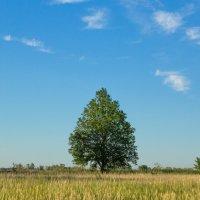 Дерево :: Надежда