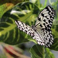 Сад живых бабочек :: Наталья Каравай
