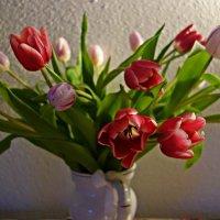 Ах, эти первые тюльпаны! :: Galina Dzubina