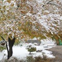 Первый снег :: Анна