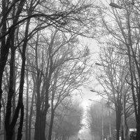 Ранней весной в парке :: Виктория Бондаренко