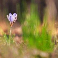 Запах весны :: Cергей Дмитриев