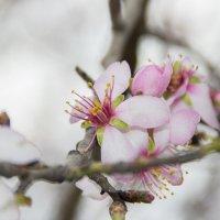 Весна пришла :: Юлия